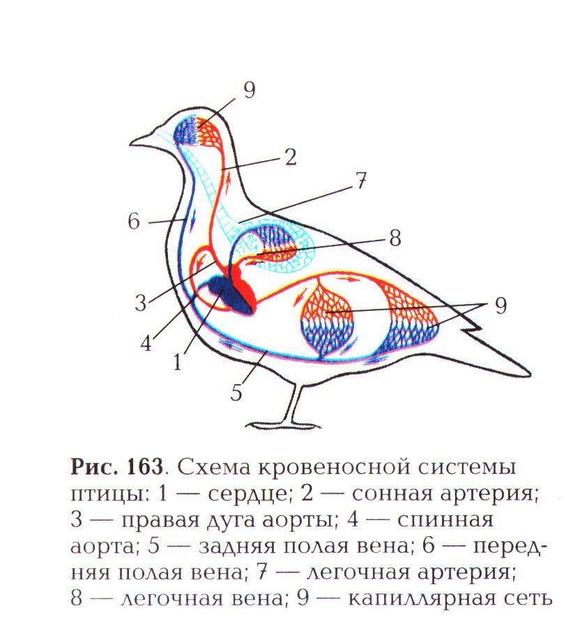 Птицы и схемы